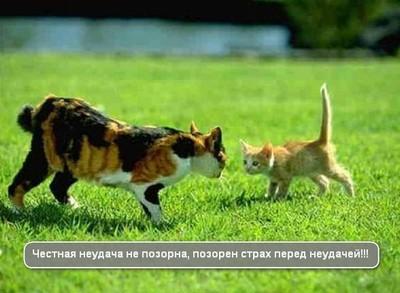 котенок против взрослого кота